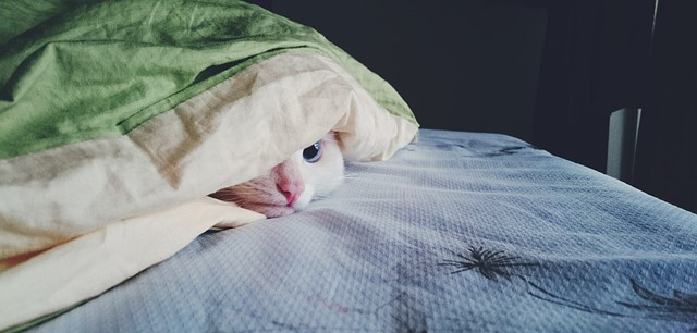 Image of a cat hiding under a blanket.