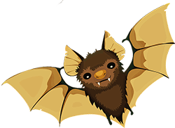 Image of an adorable bat.
