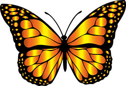 Image of a butterfly.