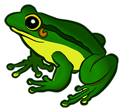 Image of a green frog