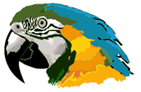 Image of a colorful parrot.