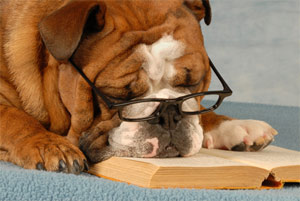 Photo of a dog sleeping on a book.