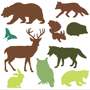 image of animals