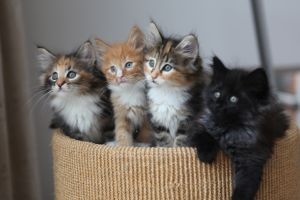 image of kittens